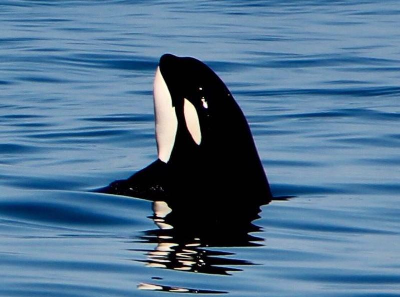 Det vestlige Canada – vildmark, vandresko og hvaler